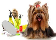 Teljes körű kutyakozmetika