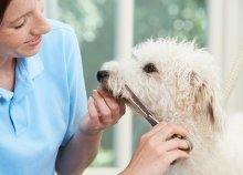 Kutyakozmetika-oktatás, tanácsadás