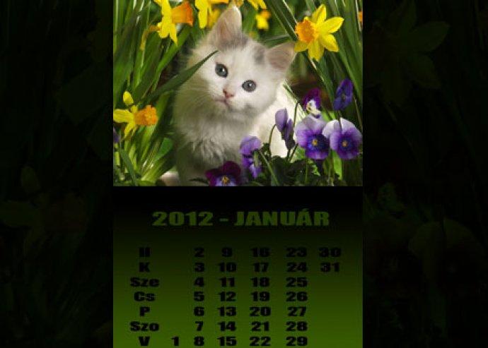 Ki mosolyog a naptárról? Hát a szeretteid! Legyenek szem előtt minden nap a legkedvesebb pillanatok... Egyedi naptárak készítésére beváltható kupon 5000 Ft helyett 2500 Ft