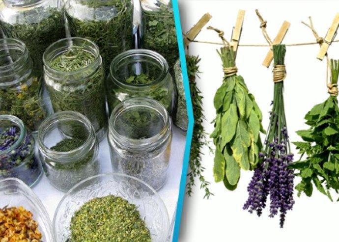 Természetes kozmetikumok gyógynövényekből tanfolyam