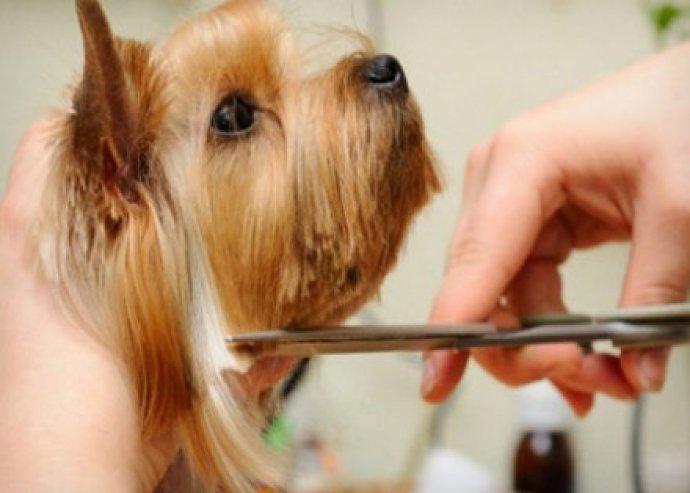 Kutyakozmetika 7 lépésben