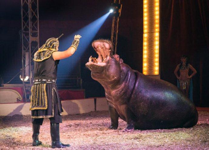 Káprázat és kacagás! Családi vagy 2 személyes belépő az Eötvös cirkusz fővárosi előadásaira!