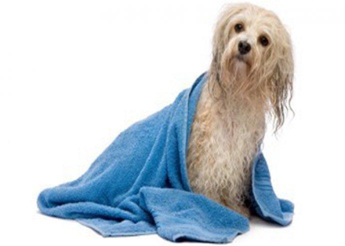 Komplett kutyakozmetikai kezelés kis és közepes testű hosszúszőrű kutyusoknak