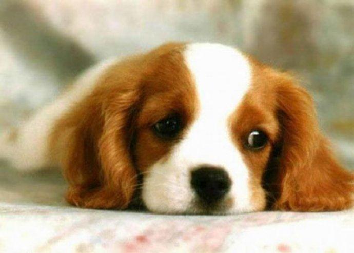 Komplett kutyakozmetika ajándék balzsammal
