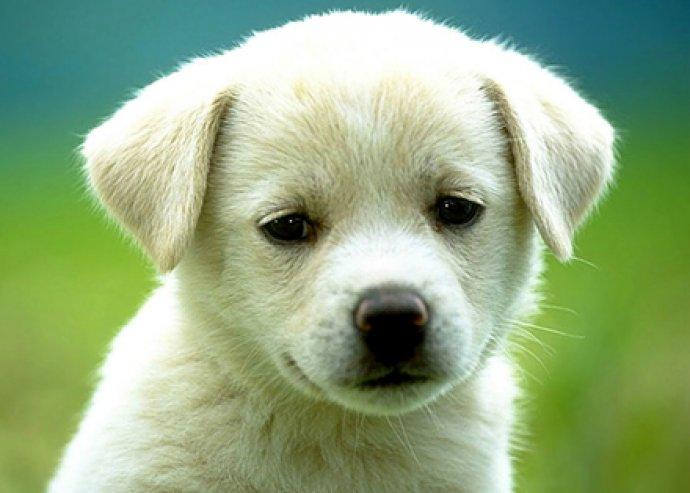 Komplett kutyakozmetika hosszúszőrű kis és közepes testű kutyusoknak