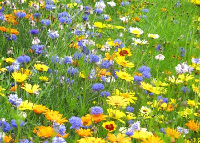 Virágterápiával a testi-lelki egészségért!