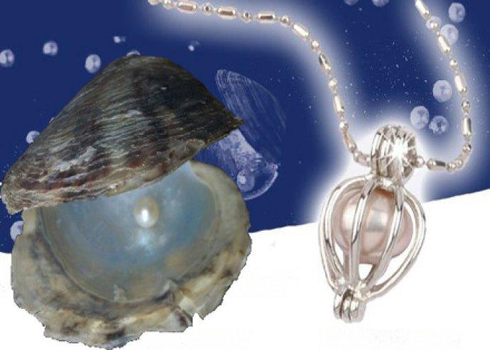 Igazgyöngyöt rejtő kagyló lánccal