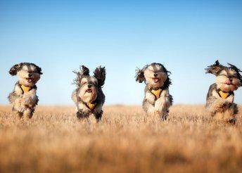 60 perces kutyafuttatás Budapesten