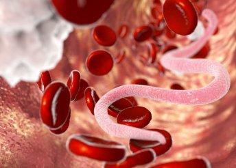 Paraziták, élősködők, rossz baktériumok irtása