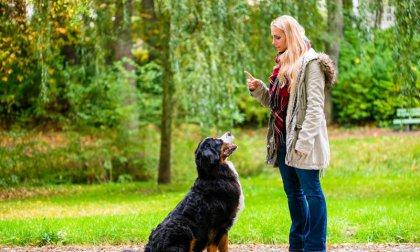 Online állati tréning: kiképzés kis kedvenceinknek tanfolyam - az IOA-től